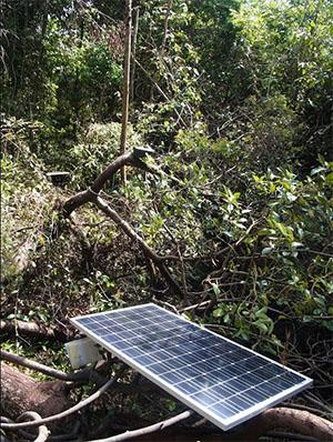密林の木の上に設置されたソーラーパネルと配信機器